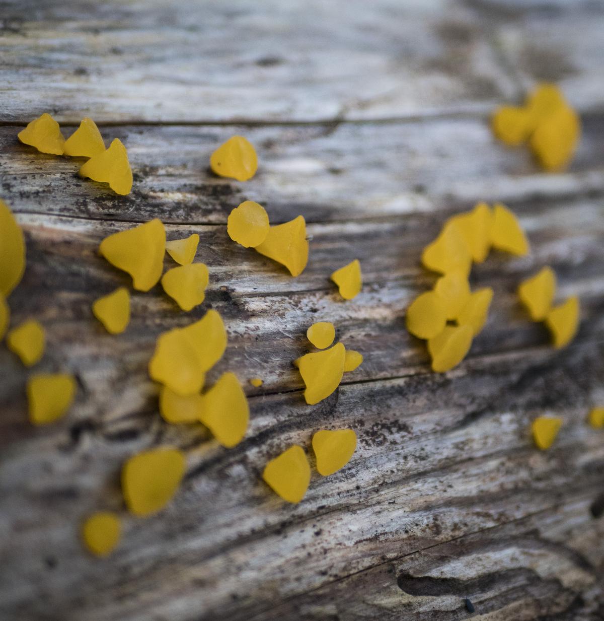nature's gummies
