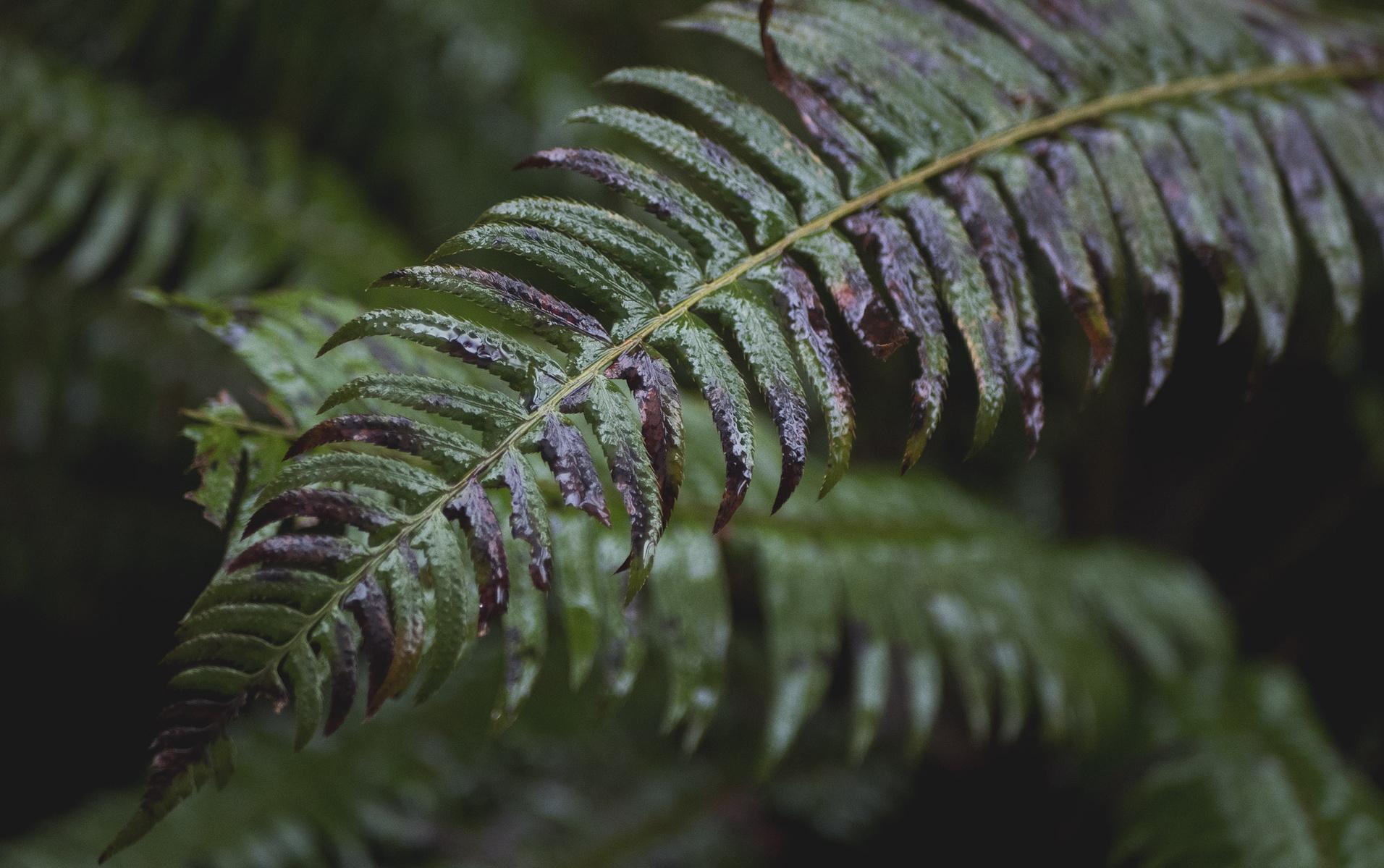 focused on the fern