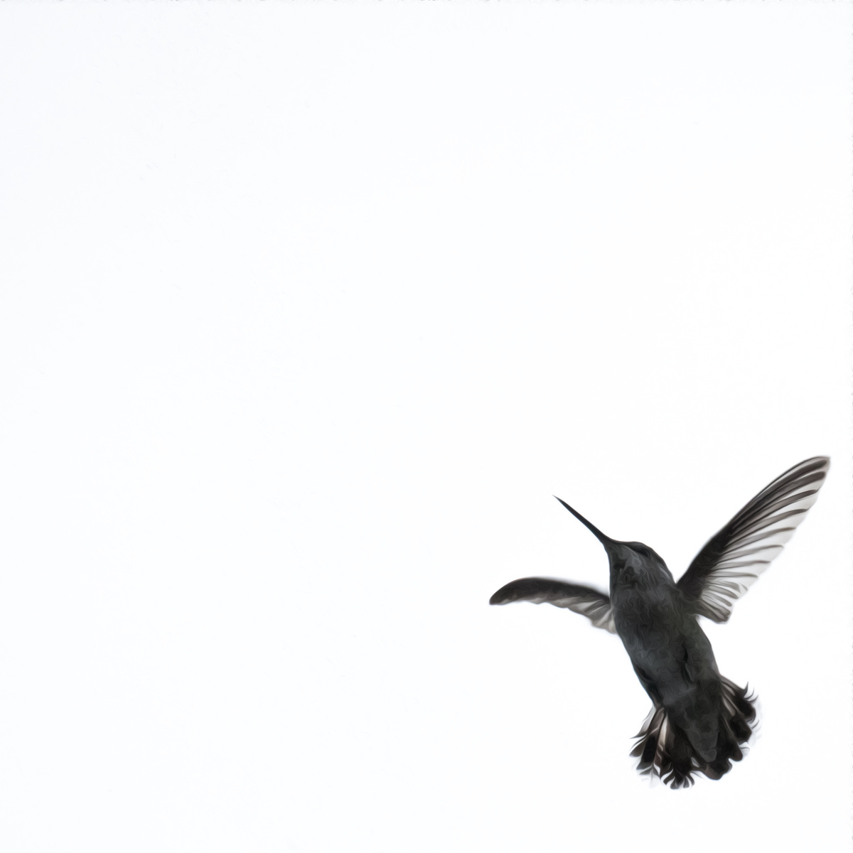 hummingbird takes flight