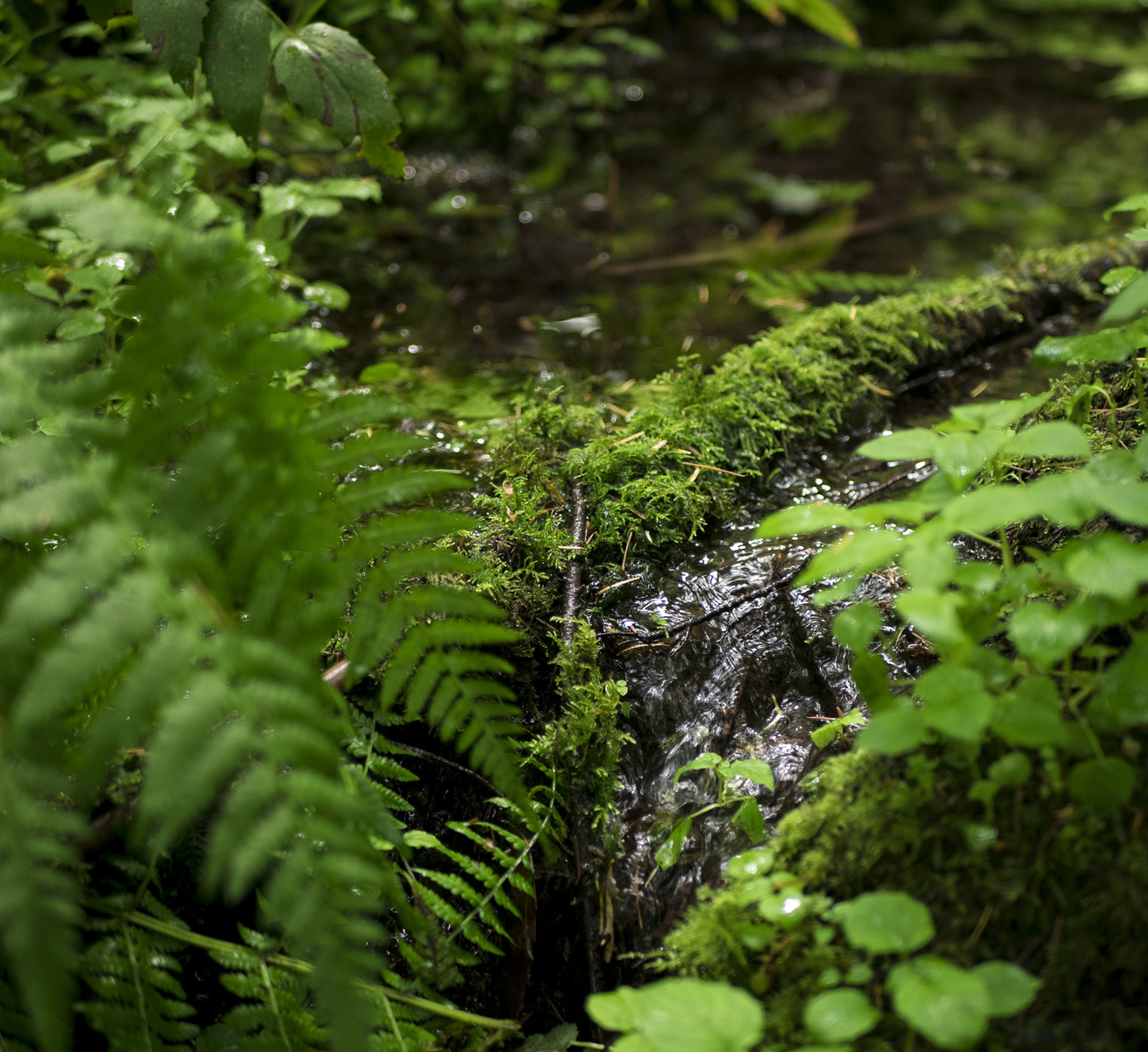 forest trickle