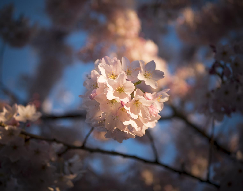 focused blossoms