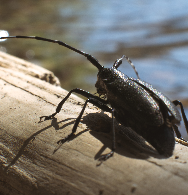 beetle adventure