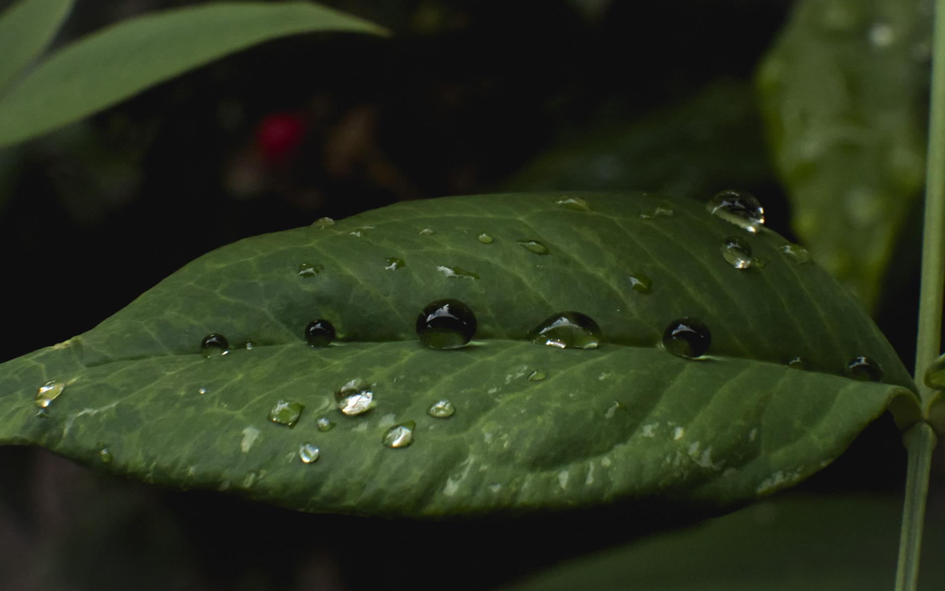 orbed leaf