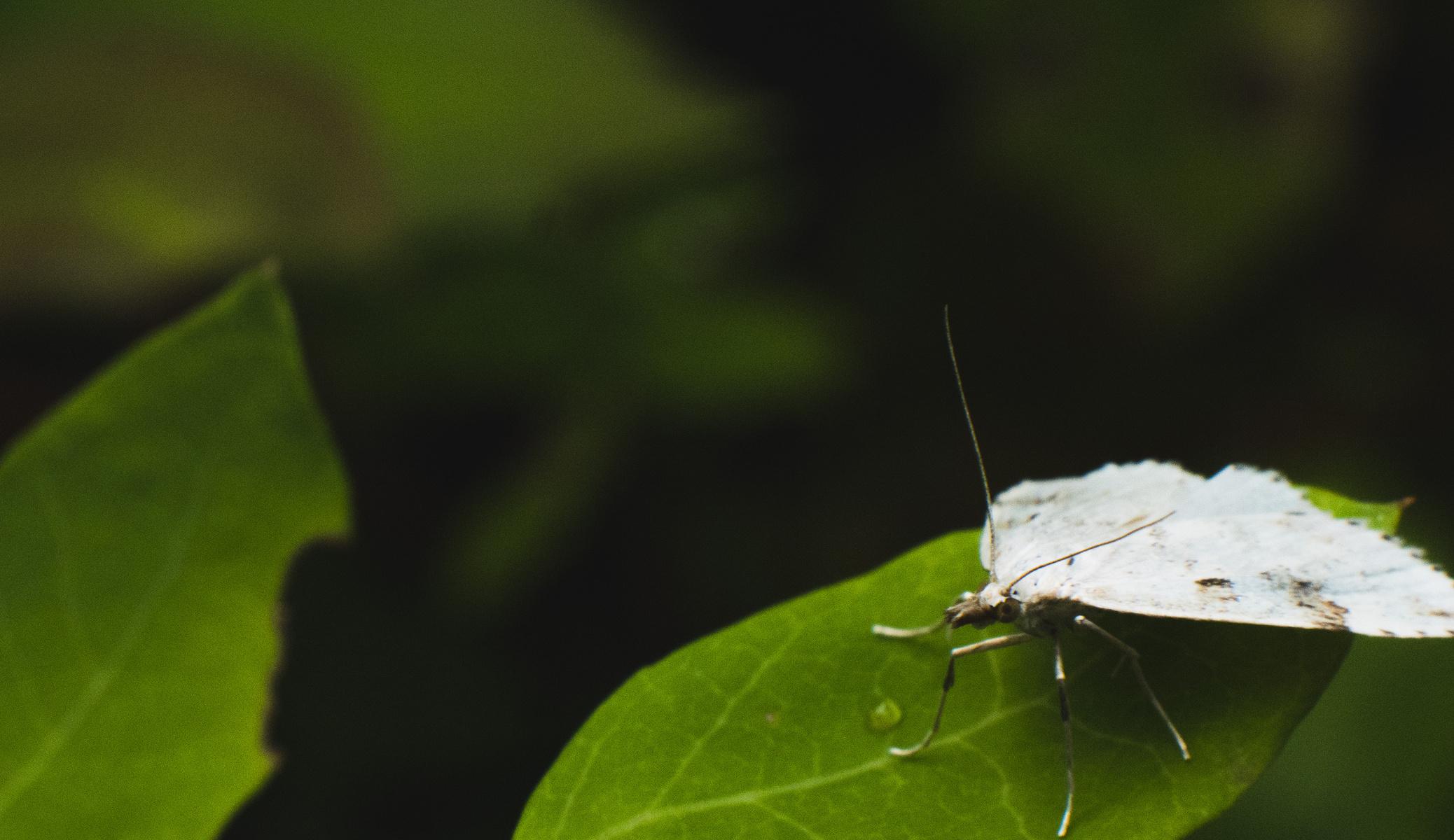 moth time