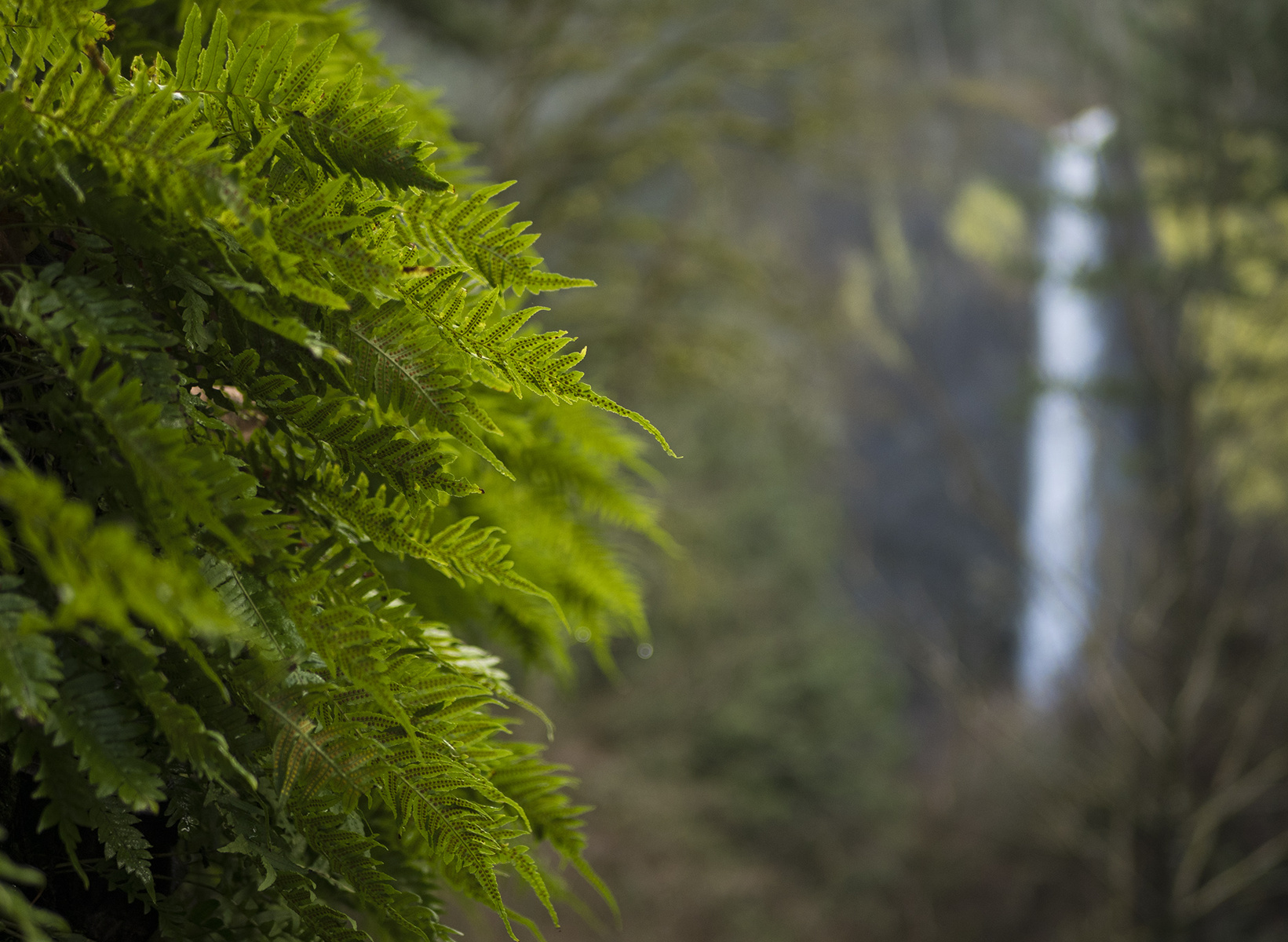 obscured by the ferns