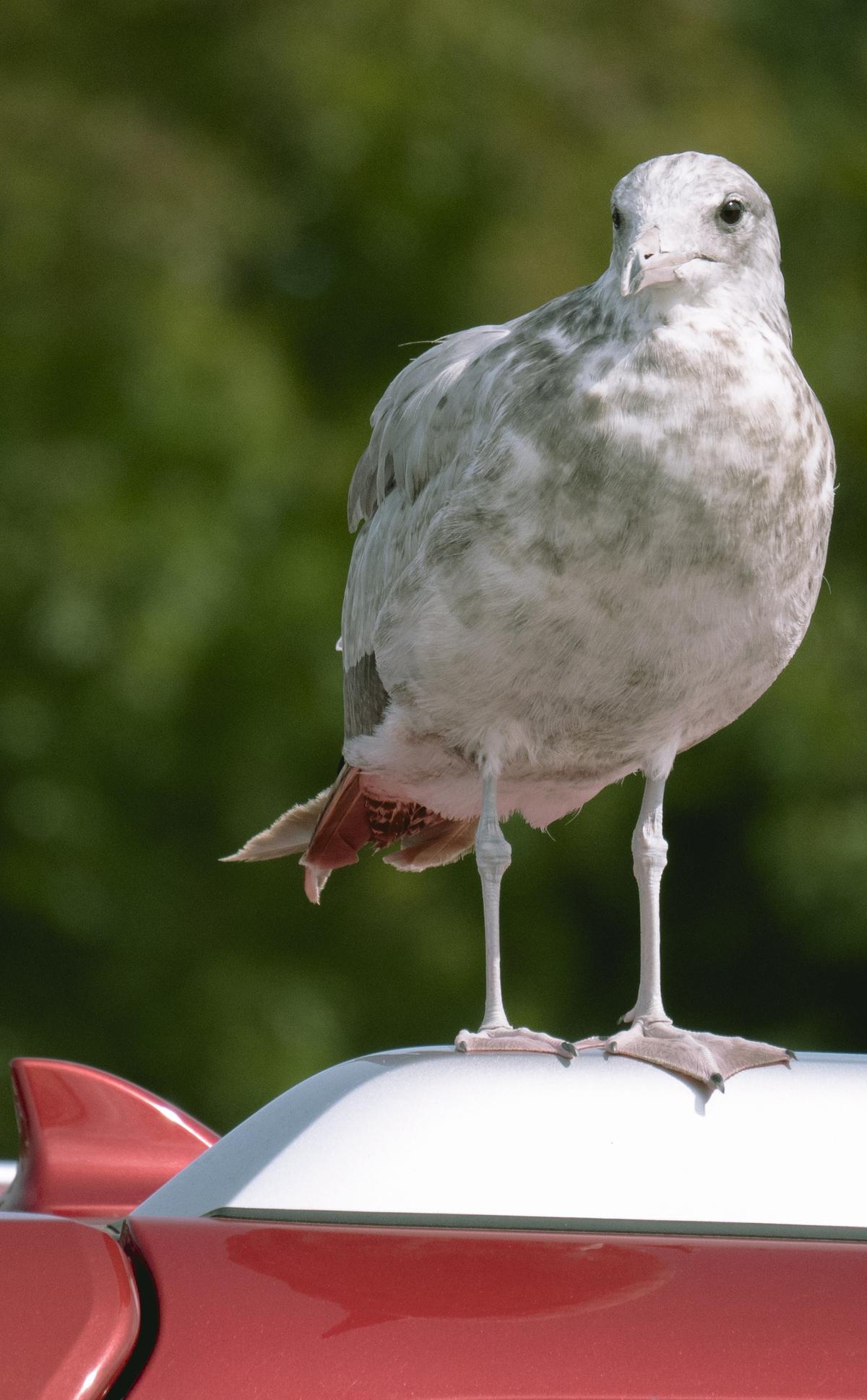 bird on the car
