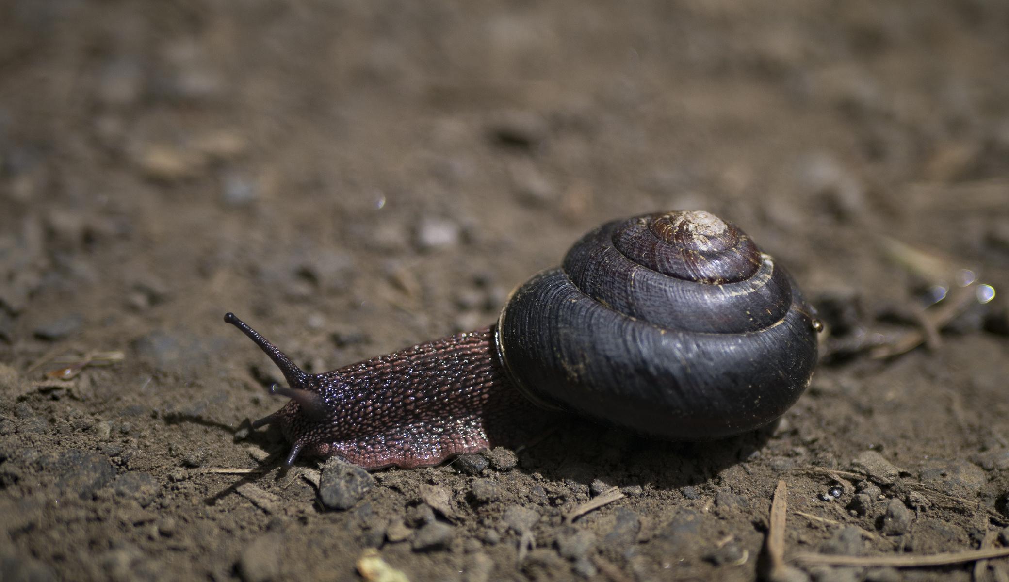 snailroad