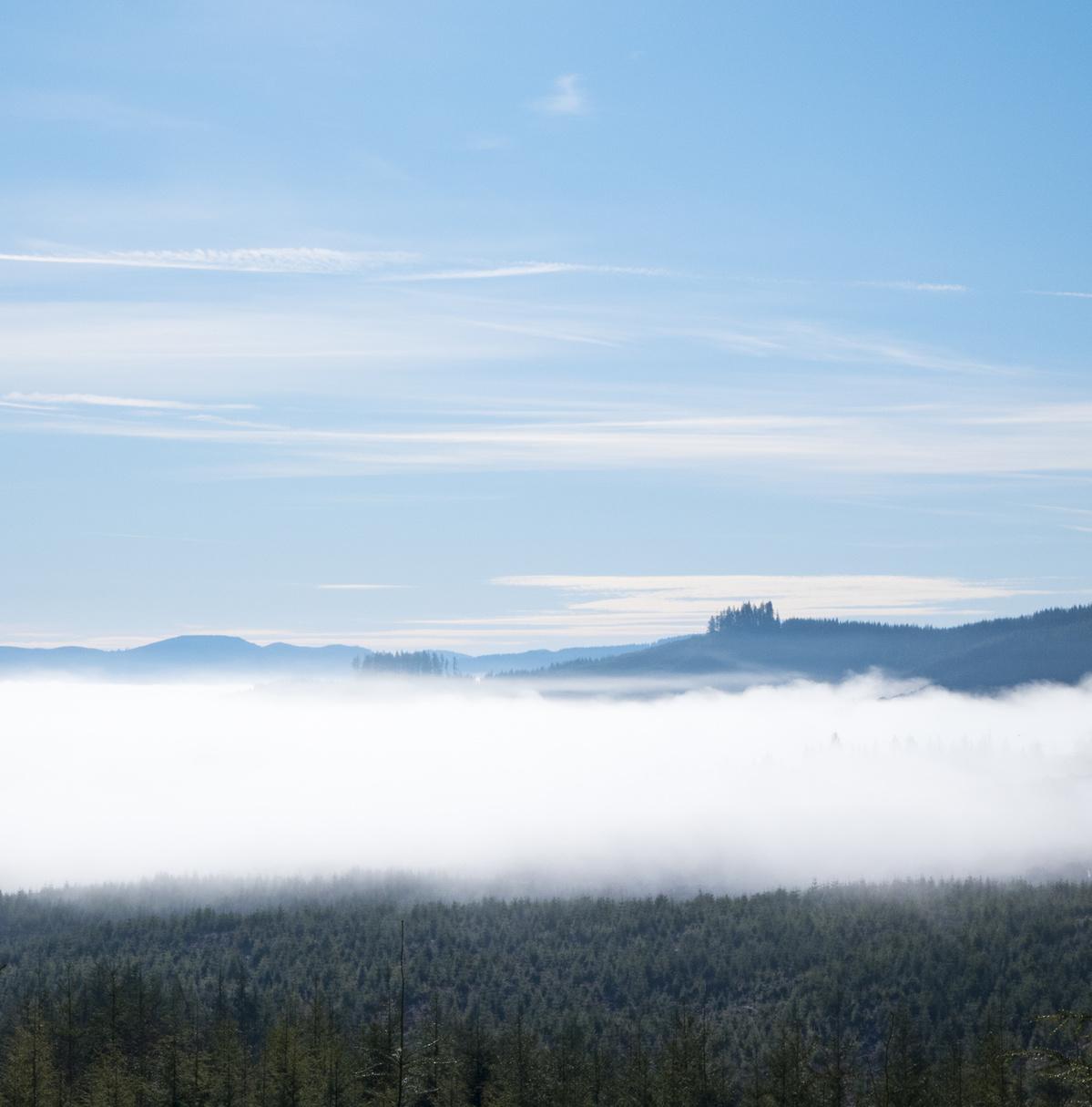 lowland fogs