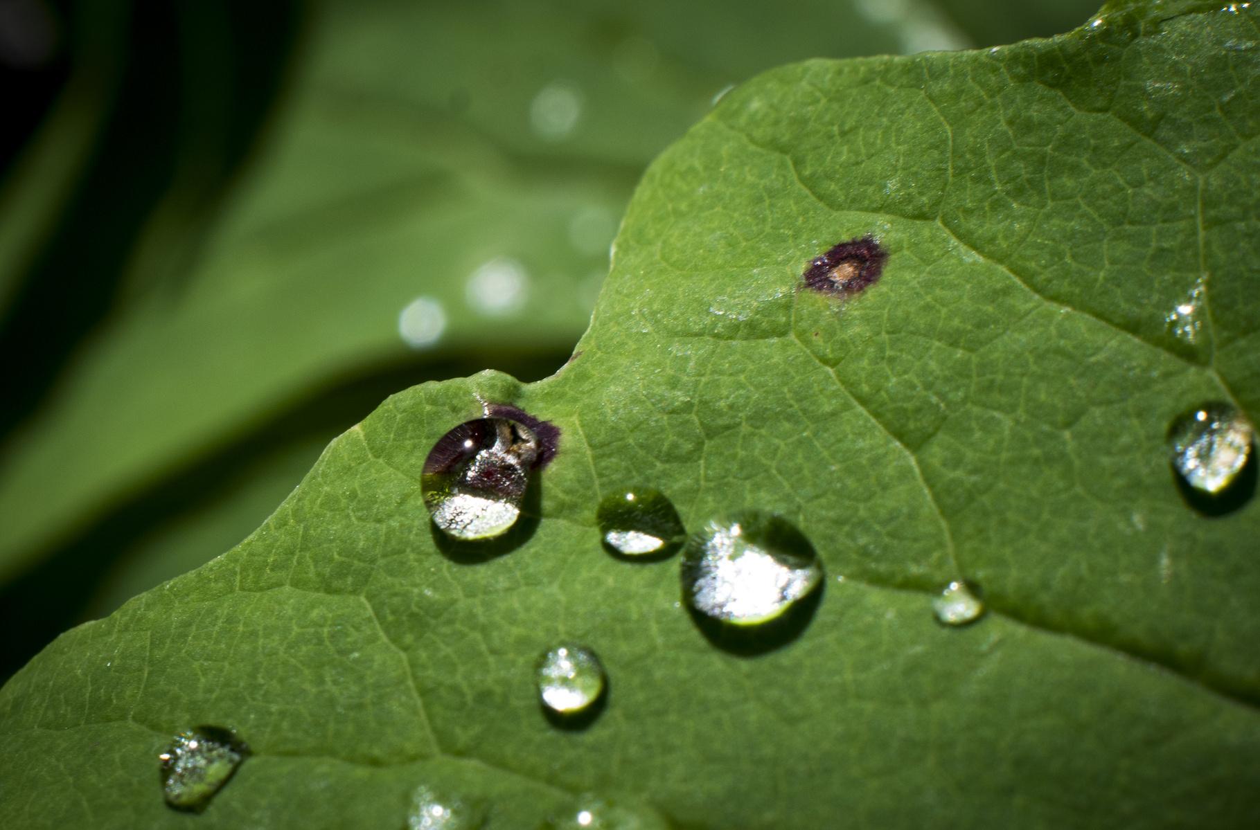 sprinkled on the leaves