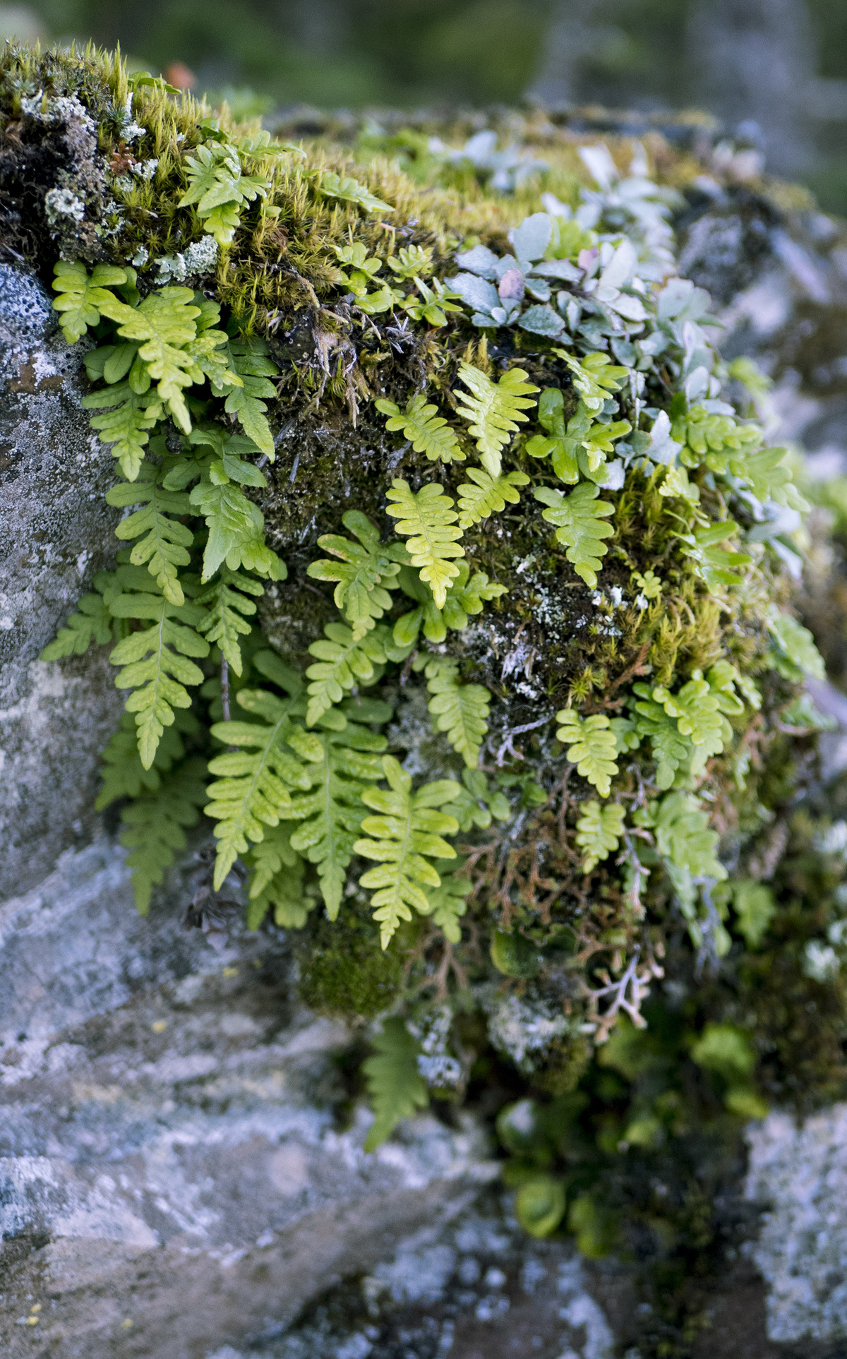 leafy overhang