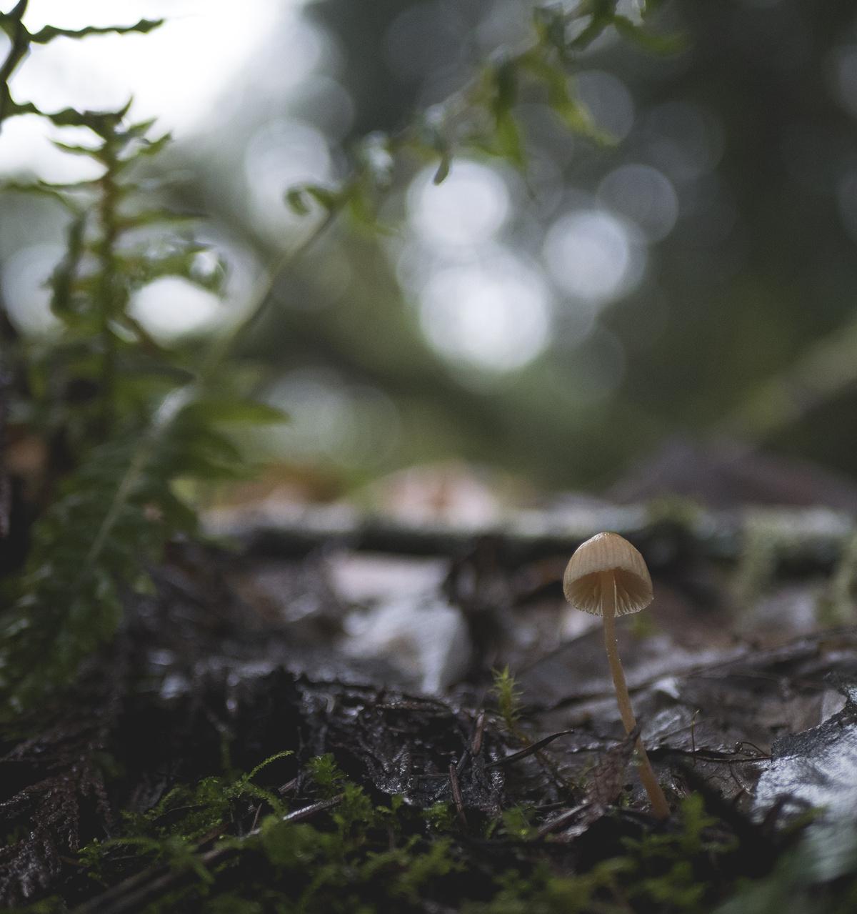 persevering mushroom